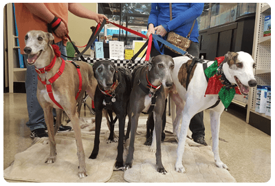 Meet & Greet with Local Greyhounds